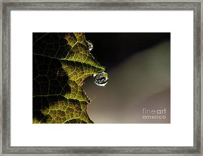 Grape Leaf With Rain Drop Framed Print by Cindi Ressler