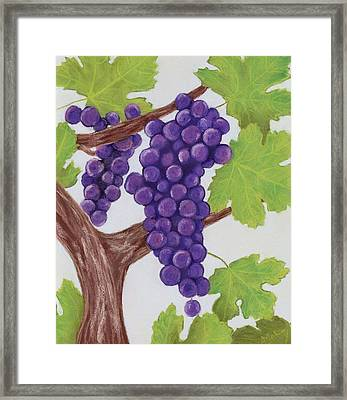 Grape Vine Framed Print by Anastasiya Malakhova