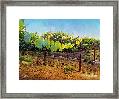 Grape Vine In The Vineyard Framed Print by Shari Warren