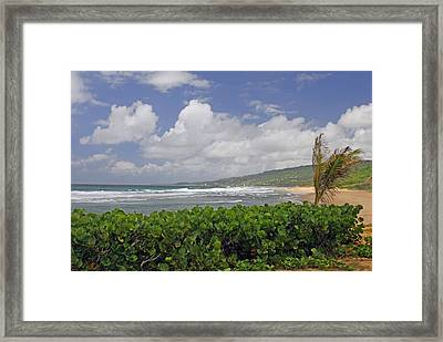 Grape Vines And Barbados Beach Framed Print by Willie Harper