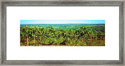 Grape Vineyards In Finger Lake Region Framed Print by Panoramic Images