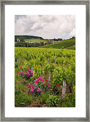 Grapes And Roses Framed Print by Allen Sheffield