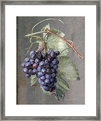 Grapes Framed Print by Enzie Shahmiri