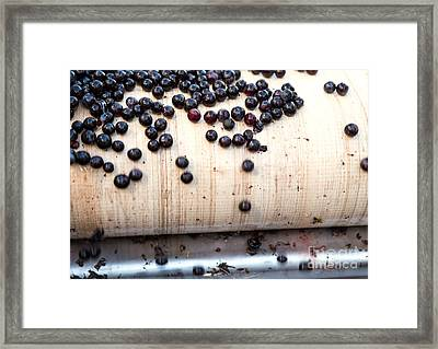 Grapes Getting Crushing Framed Print by Iris Richardson