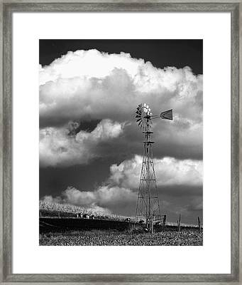 Grapes Of Wrath Framed Print by Dick Wood
