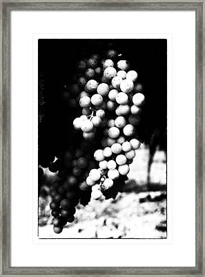 Grapes On The Vine In Mono Framed Print by Georgia Fowler