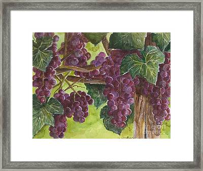 Grapes On The Vine Framed Print by Sheryl Heatherly Hawkins