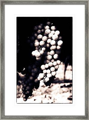 Grapes On The Vine - Toned Framed Print by Georgia Fowler