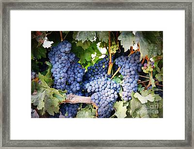 Grapes With Textures Framed Print by Carol Groenen