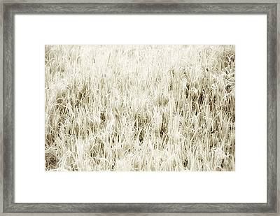 Grass Abstract Framed Print by Elena Elisseeva