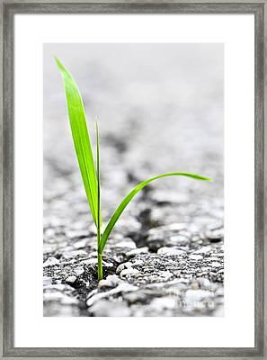 Grass In Asphalt Framed Print by Elena Elisseeva