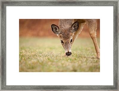 Grass Pickins Framed Print by Karol Livote