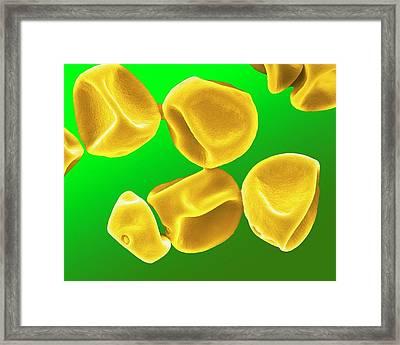 Grass Pollen Framed Print by Clouds Hill Imaging Ltd