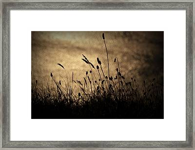 Grass Stalk Framed Print by Chevy Fleet