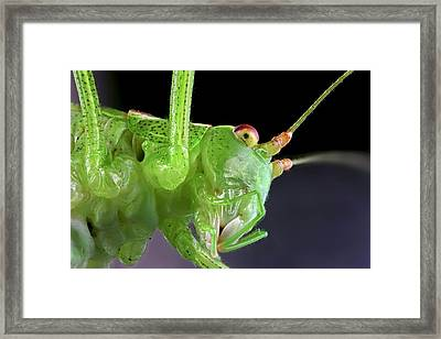 Grasshopper Head Framed Print by Frank Fox