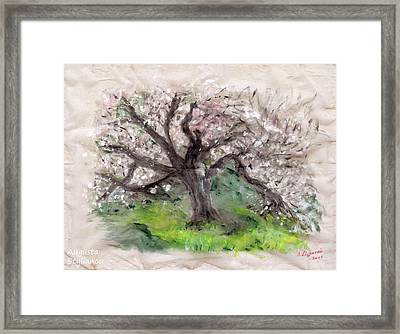 Gravity Of The Almond Tree Framed Print by Augusta Stylianou
