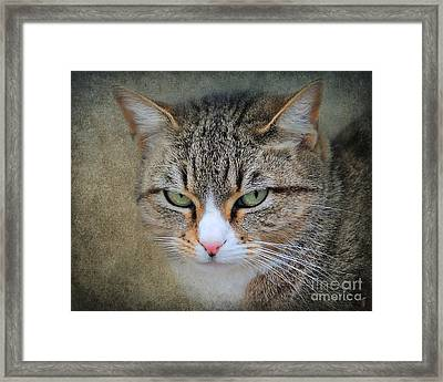 Gray Tabby Cat Framed Print by Jai Johnson
