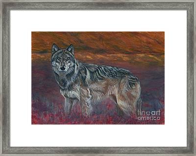 Gray Wolf Framed Print by Tom Blodgett Jr
