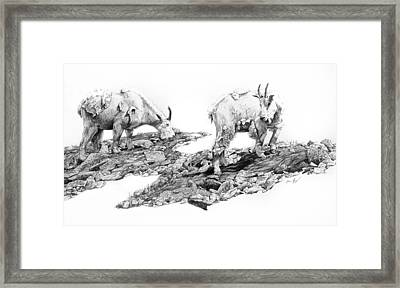Grazing Framed Print by Aaron Spong