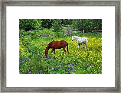 Grazing Amongst The Wildflowers Framed Print by Karol Livote