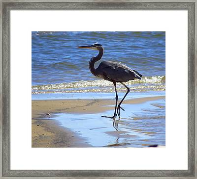 Great Blue And Beach Framed Print by Phyllis Beiser