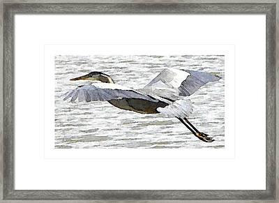 Great Blue Flight Framed Print by John Goyer