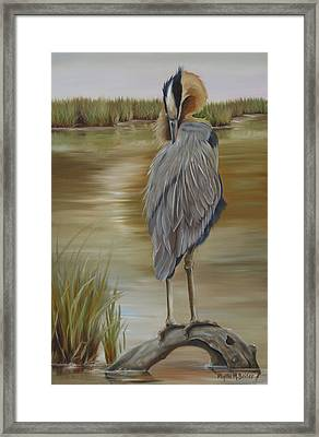 Great Blue Heron At Half Moon Island Framed Print by Phyllis Beiser