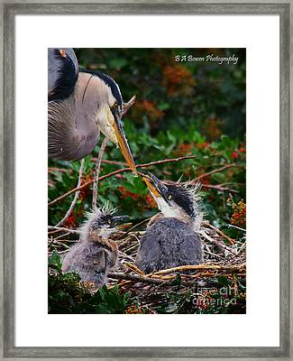 Great Blue Heron Family Framed Print by Barbara Bowen