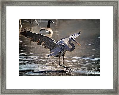Great Blue Heron Skiing Framed Print by Nava  Thompson