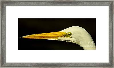 Great Egret Head Framed Print by Robert Frederick