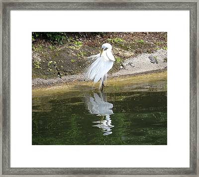 Great Egret In The Lake Framed Print by Zina Stromberg