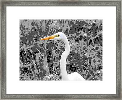 Great Egret Poster Framed Print by Dan Sproul