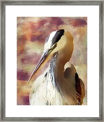 Great Heron Portrait Framed Print by Georgiana Romanovna