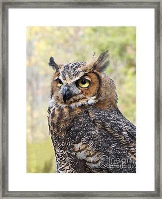 Great Horned Owl Framed Print by Ann Horn