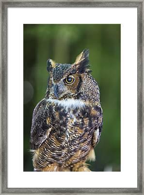 Great Horned Owl Framed Print by Bill Tiepelman