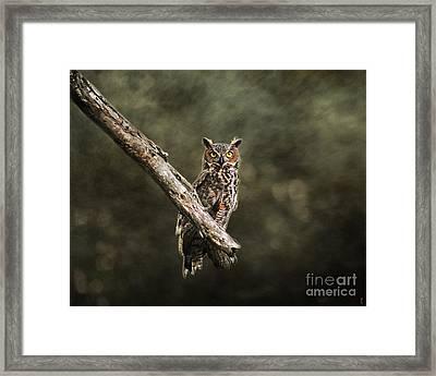Great Horned Owl I Framed Print by Jai Johnson