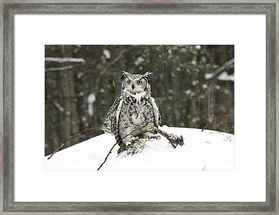Great Horned Owl In A Winter Snow Storm Framed Print by Inspired Nature Photography Fine Art Photography