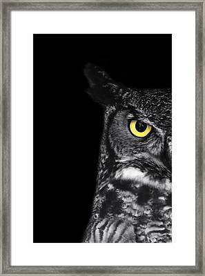 Great Horned Owl Photo Framed Print by Stephanie McDowell