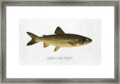 Great Lake Trout Framed Print by Aged Pixel