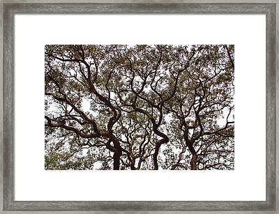Great Oak Framed Print by Aimee L Maher Photography and Art Visit ALMGallerydotcom