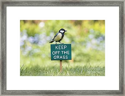 Great Tit On A Keep Off The Grass Sign Framed Print by Tim Gainey