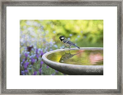 Great Tit Reflection  Framed Print by Tim Gainey