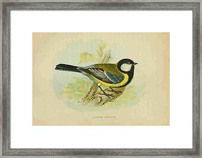 Great Titmouse Framed Print by Philip Ralley