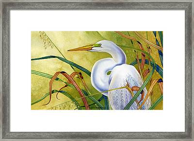 Great White Heron Framed Print by Lyse Anthony