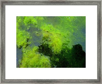 Green Algae Framed Print by Salman Ravish