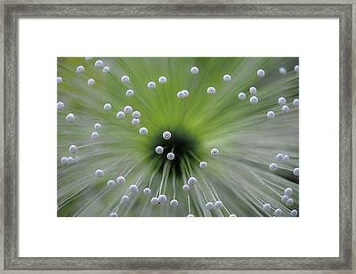 Green And White II Framed Print by Wave Faber