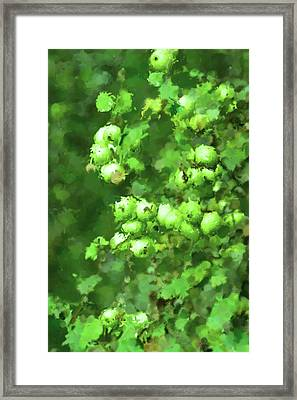 Green Apple On A Branch Framed Print by Toppart Sweden