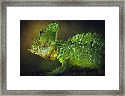 Green Basilisk Framed Print by Maria Angelica Maira