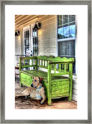 Green Bench And Catahoula Dog Framed Print by Delilah Downs