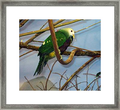 Green Bird Framed Print by Larry Stolle